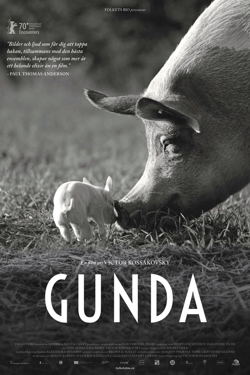 You are currently viewing Gunda