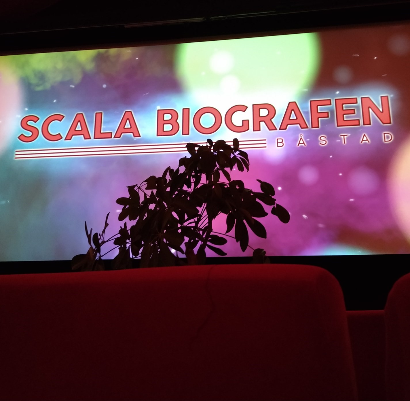 Bio för krukväxter – Puccinis Madama Butterfly